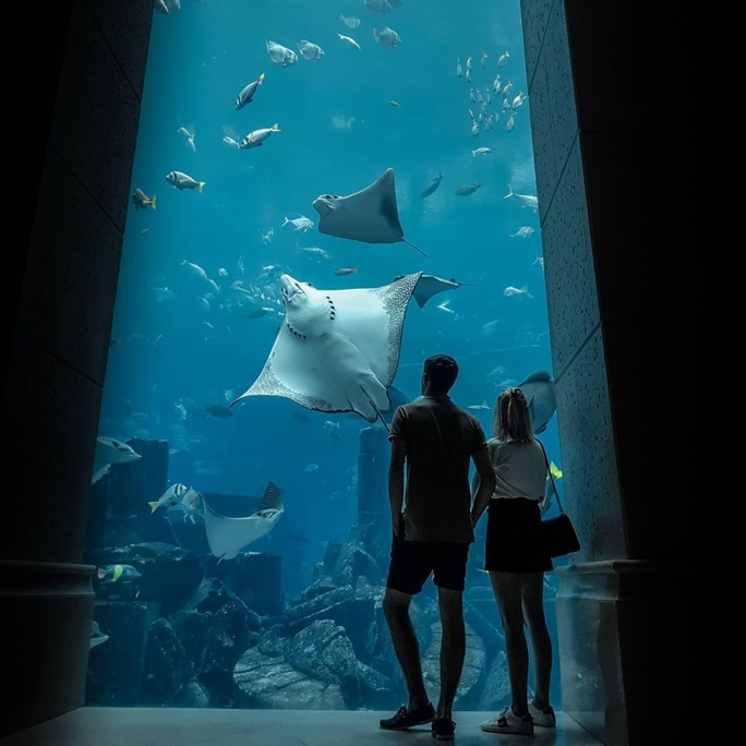 A silhouetted image of  a couple standing in front of a large aquarium, the tank is well lit and you can see a variety of marine life including sting rays, fish and more