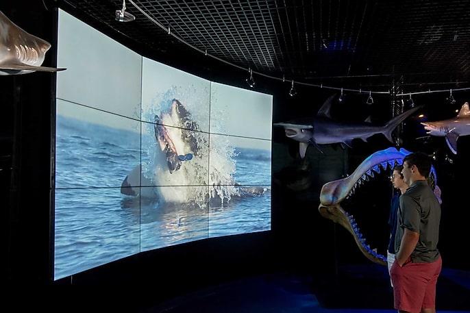 Digital Displays Bring the Wonders of Wildlife Indoors
