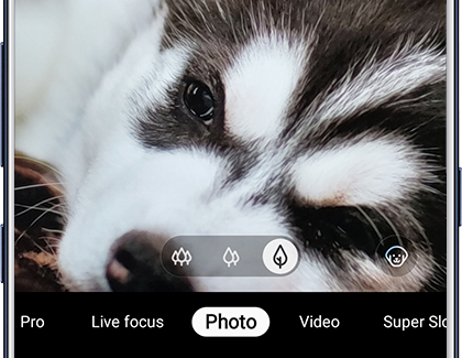 Photo of a puppy with Scene Optimizer recognizing the puppy
