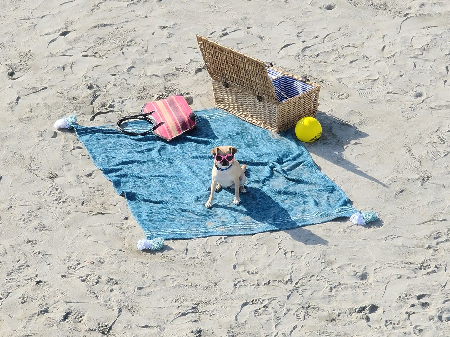 Photo taken on Galaxy S20 Ultra of a beach with many people. As we zoom in on the photo, we see a funny moment of a dog sitting on a beach towel with pink goggles on, showing how Space Zoom lets you find moments you might have otherwise missed